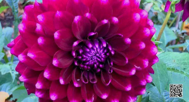 Blumengedicht qr